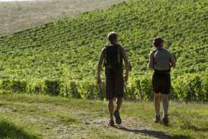 Vignobles de Reuilly / ©Hellio et Van Ingen
